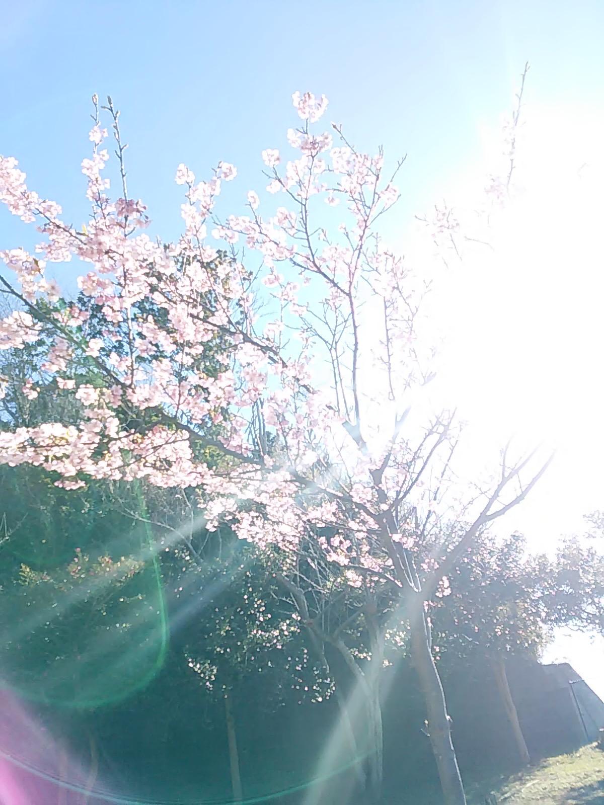 2513 桜さん