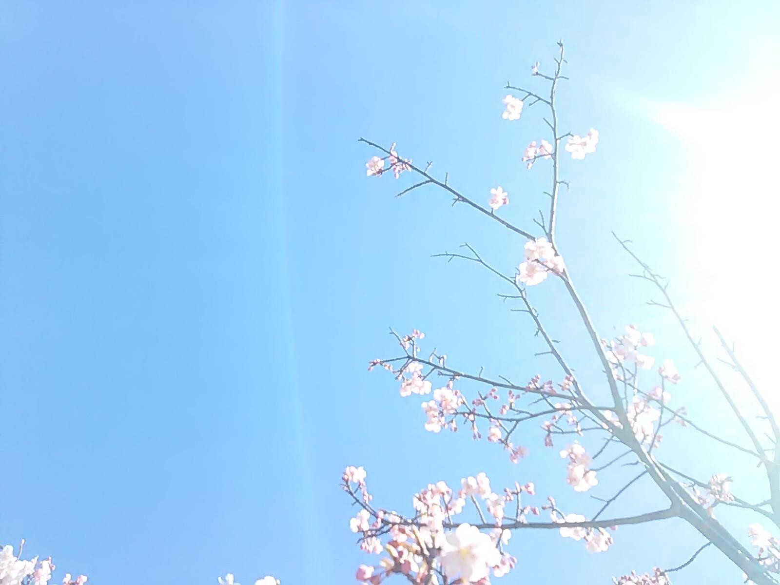 2468 桜さん光