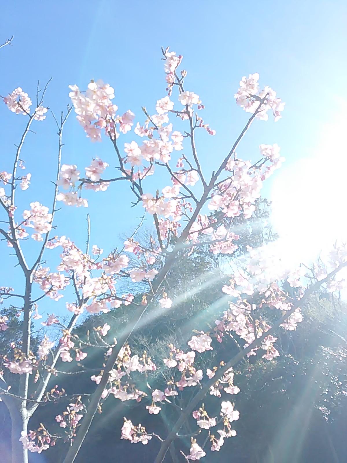 2506 桜さん