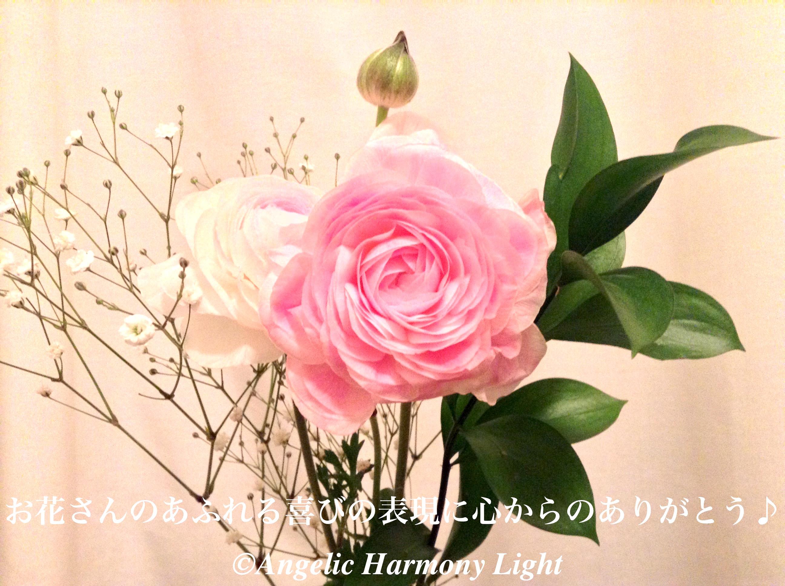 20180331-お花さん喜びの表現をありがとう♪