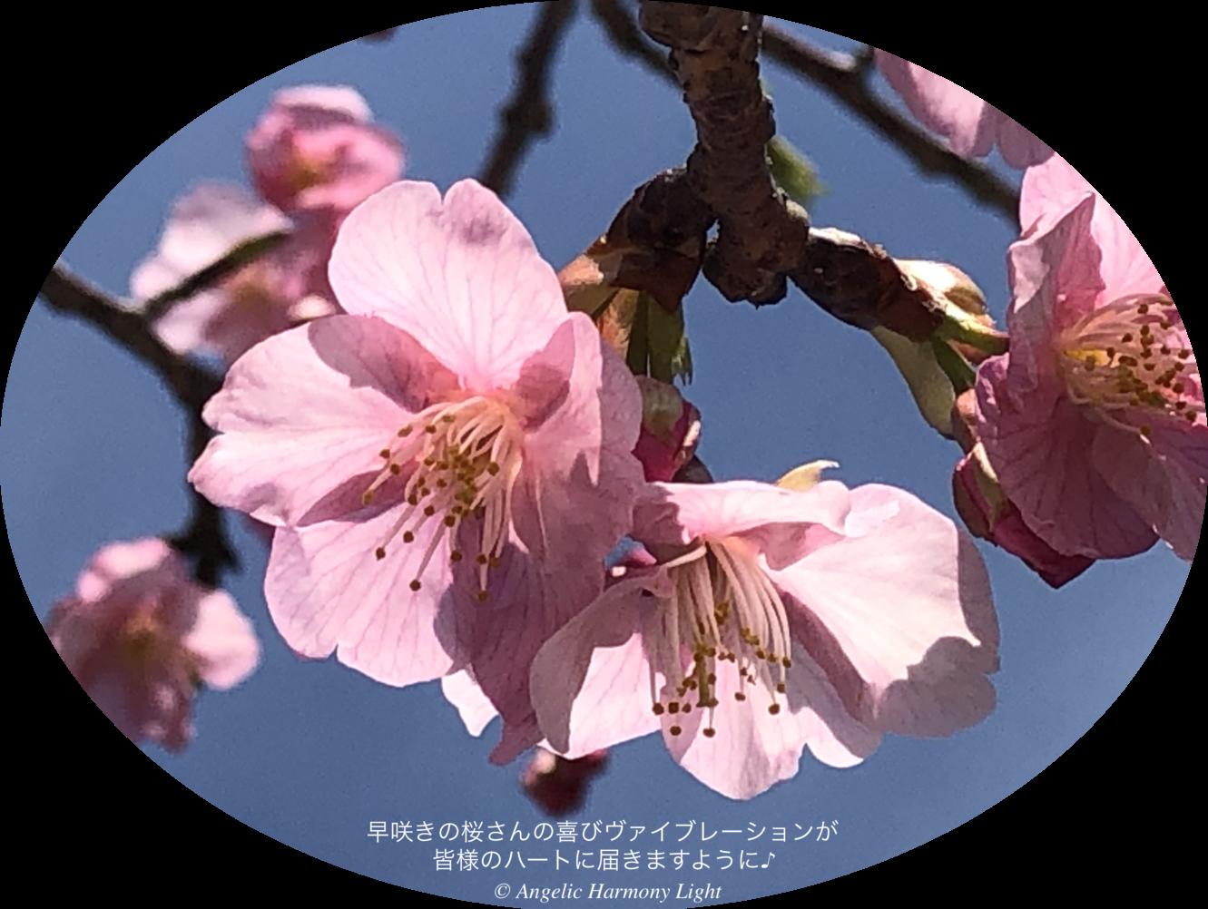 20210213 桜さんの喜びヴァイブレーション